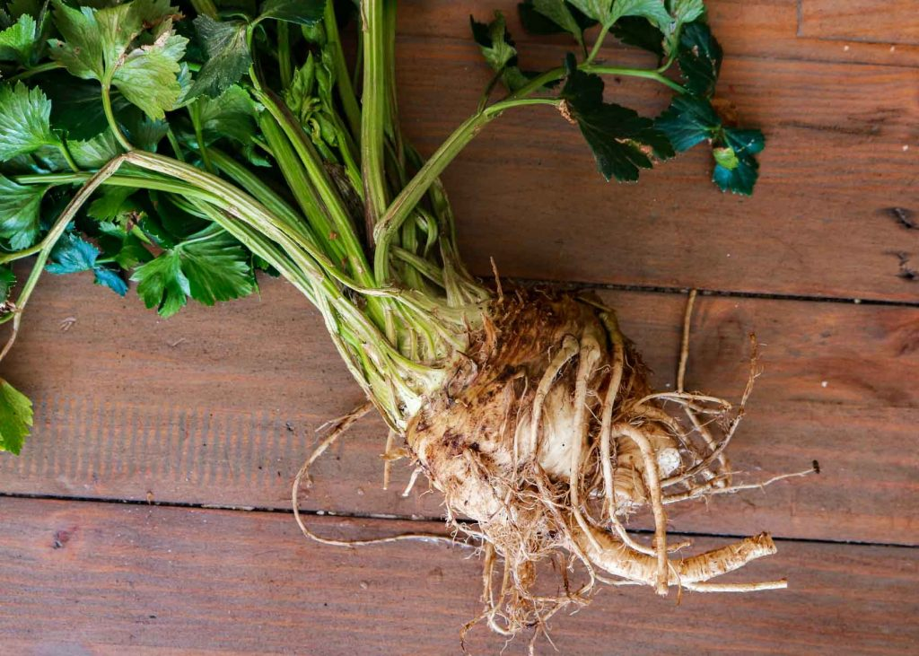 A whole celeriac with it's leaves.